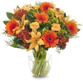 פרחי עירית בלוז בשקיעה